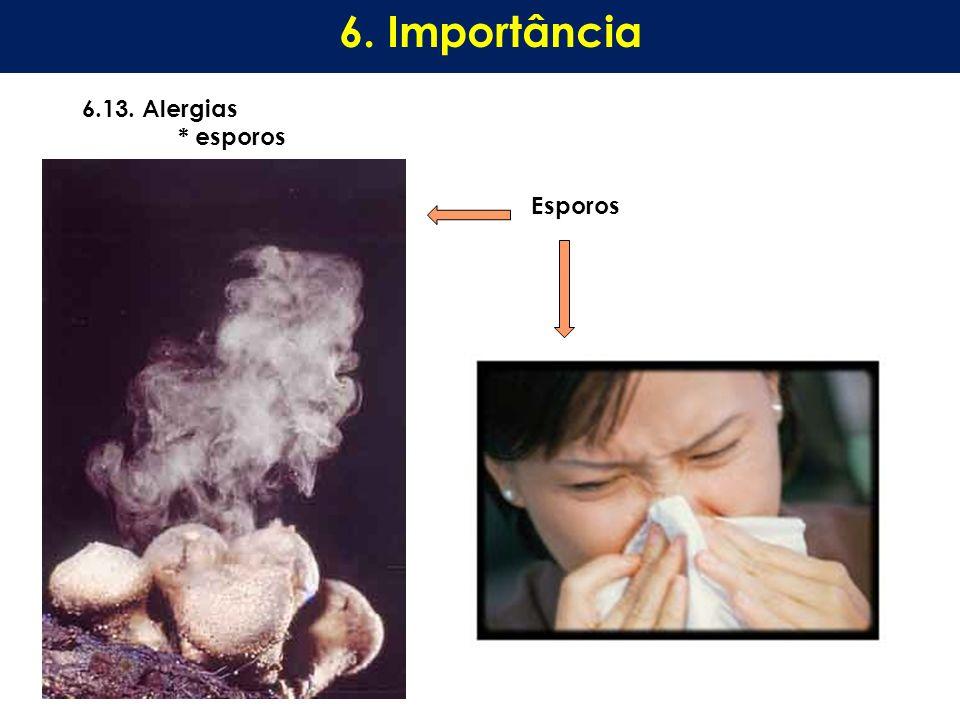 6. Importância 6.13. Alergias * esporos Esporos
