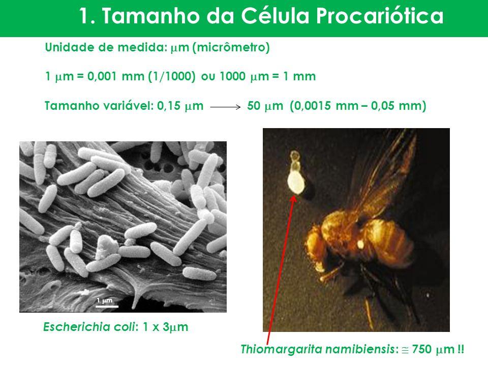 1. Tamanho da Célula Procariótica