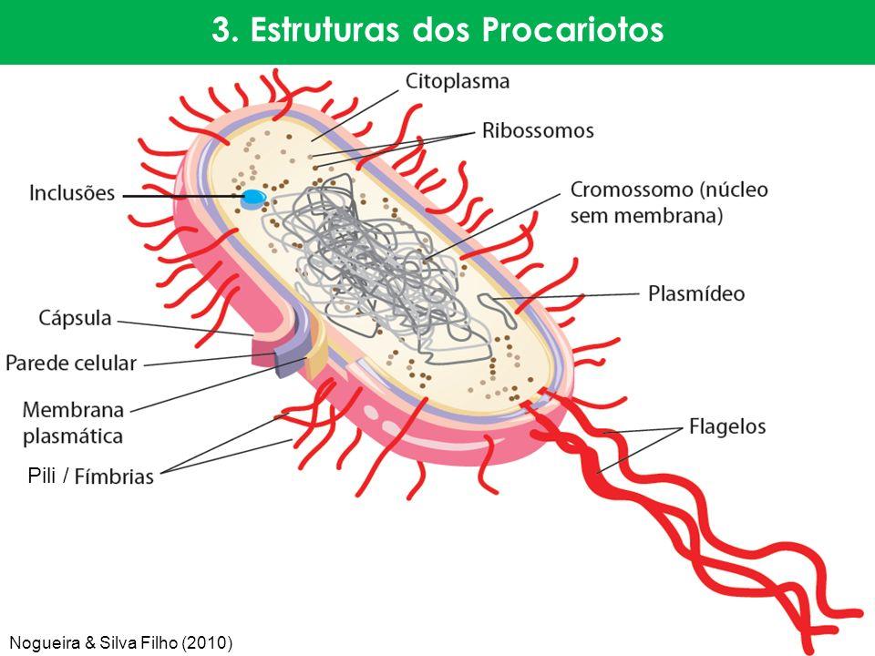 3. Estruturas dos Procariotos