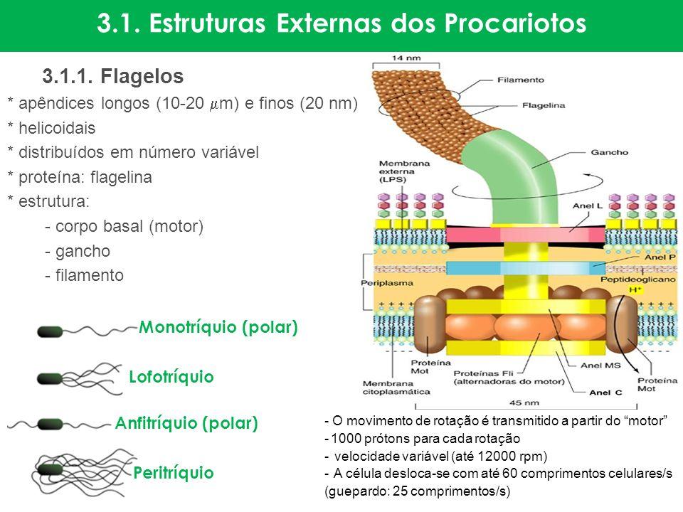 3.1. Estruturas Externas dos Procariotos