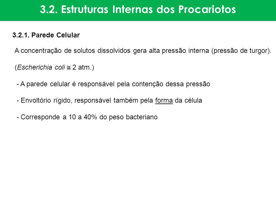 3.2. Estruturas Internas dos Procariotos