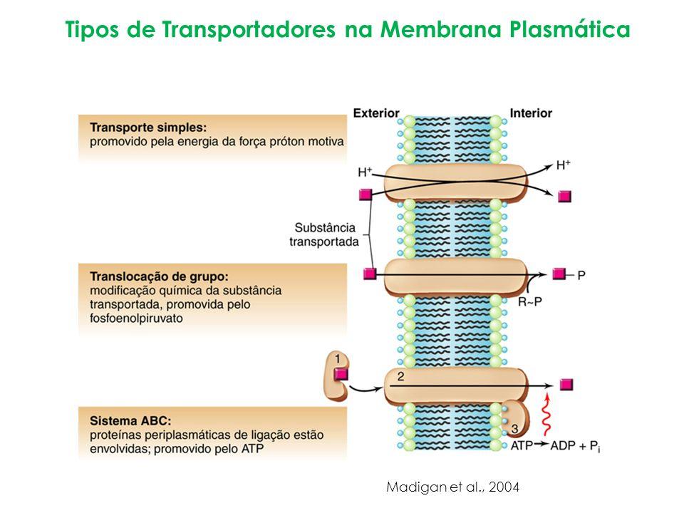 Tipos de Transportadores na Membrana Plasmática