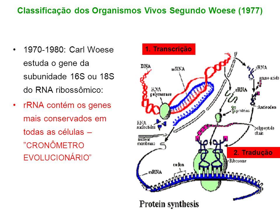 Classificação dos Organismos Vivos Segundo Woese (1977)