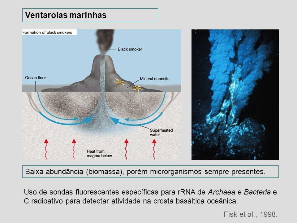 Ventarolas marinhas Baixa abundância (biomassa), porém microrganismos sempre presentes.