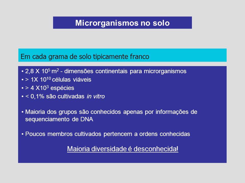 Microrganismos no solo