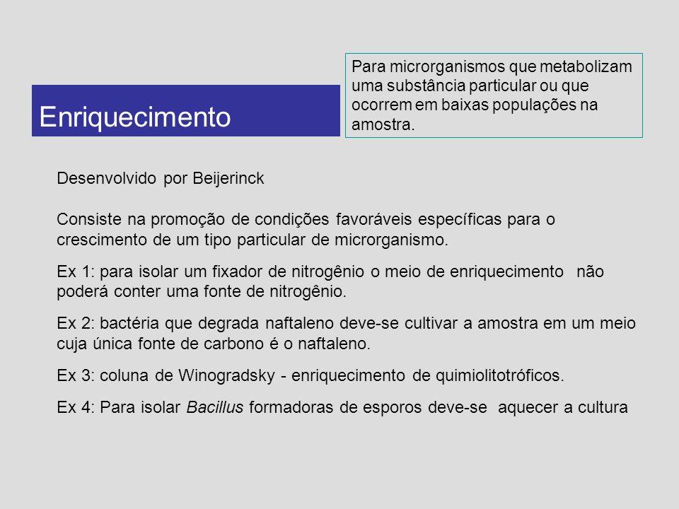 Enriquecimento Desenvolvido por Beijerinck