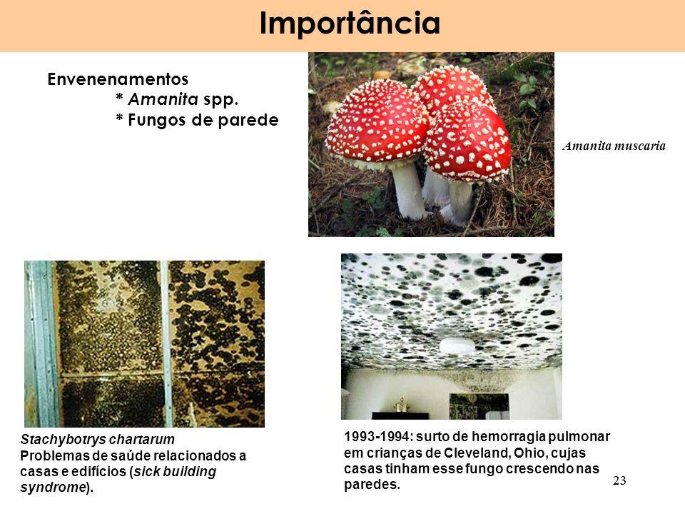 Importância Envenenamentos * Amanita spp. * Fungos de parede