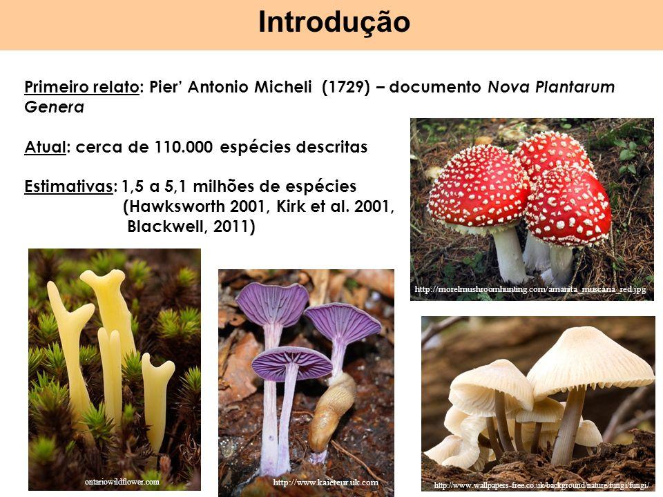 Introdução Primeiro relato: Pier' Antonio Micheli (1729) – documento Nova Plantarum Genera. Atual: cerca de 110.000 espécies descritas.