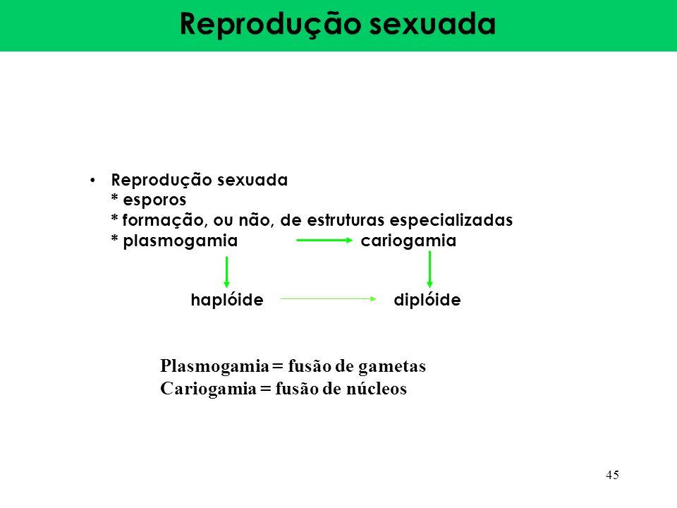 Reprodução sexuada Plasmogamia = fusão de gametas