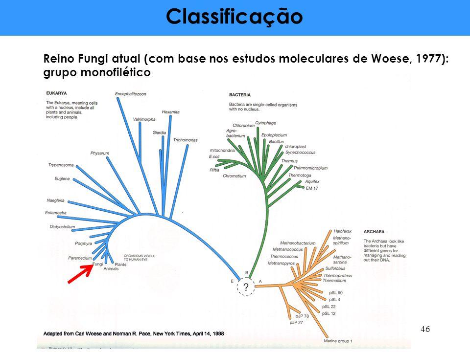Classificação Reino Fungi atual (com base nos estudos moleculares de Woese, 1977): grupo monofilético.