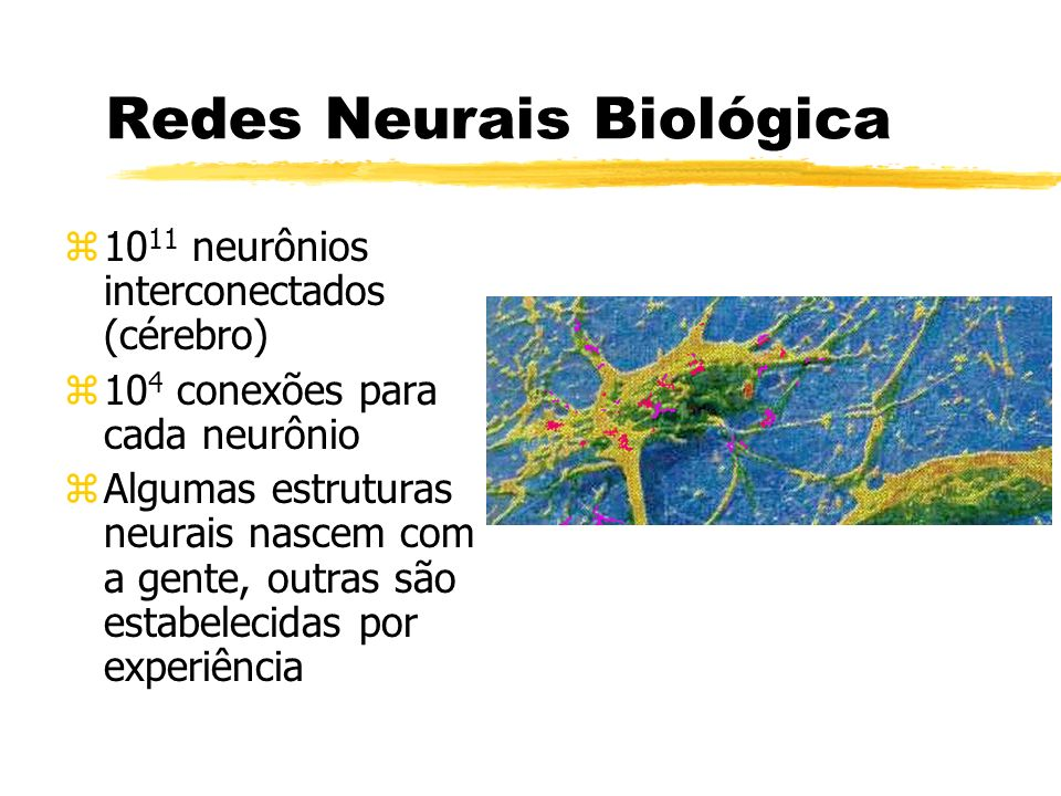 Redes Neurais Biológica