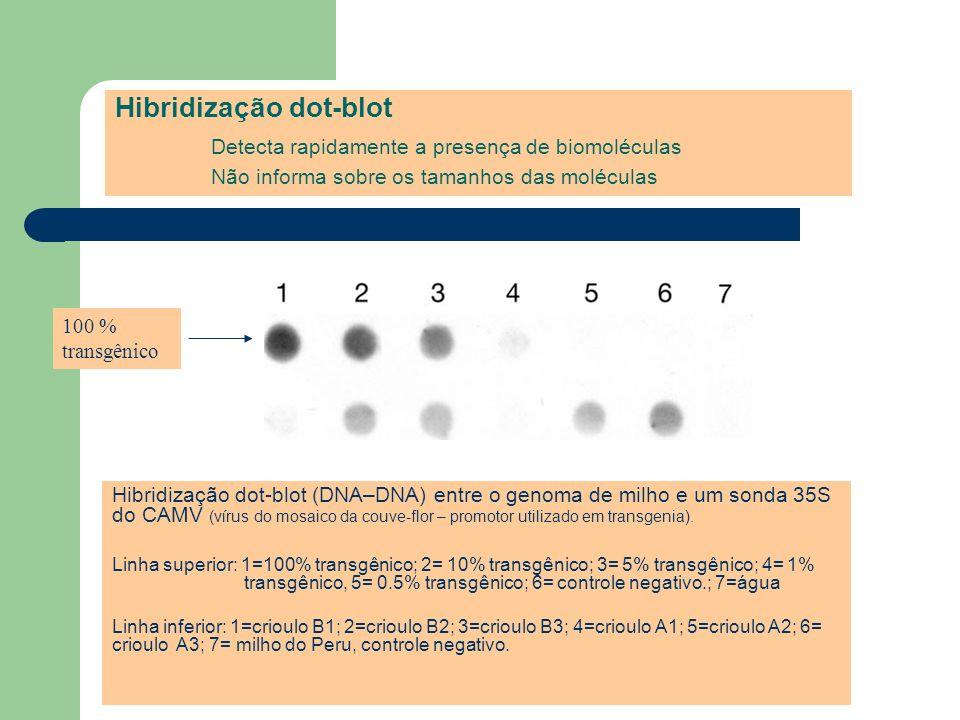 Hibridização dot-blot. Detecta rapidamente a presença de biomoléculas