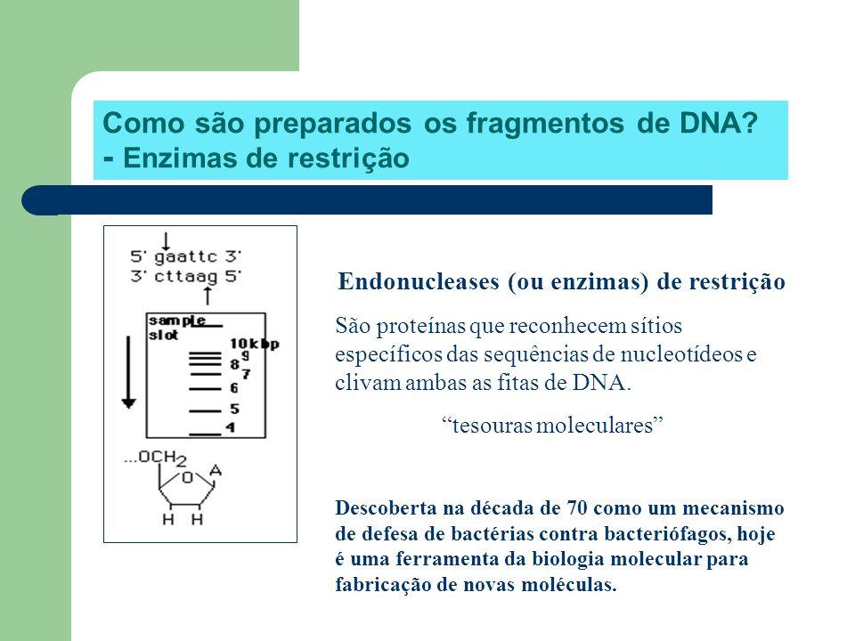 Como são preparados os fragmentos de DNA - Enzimas de restrição