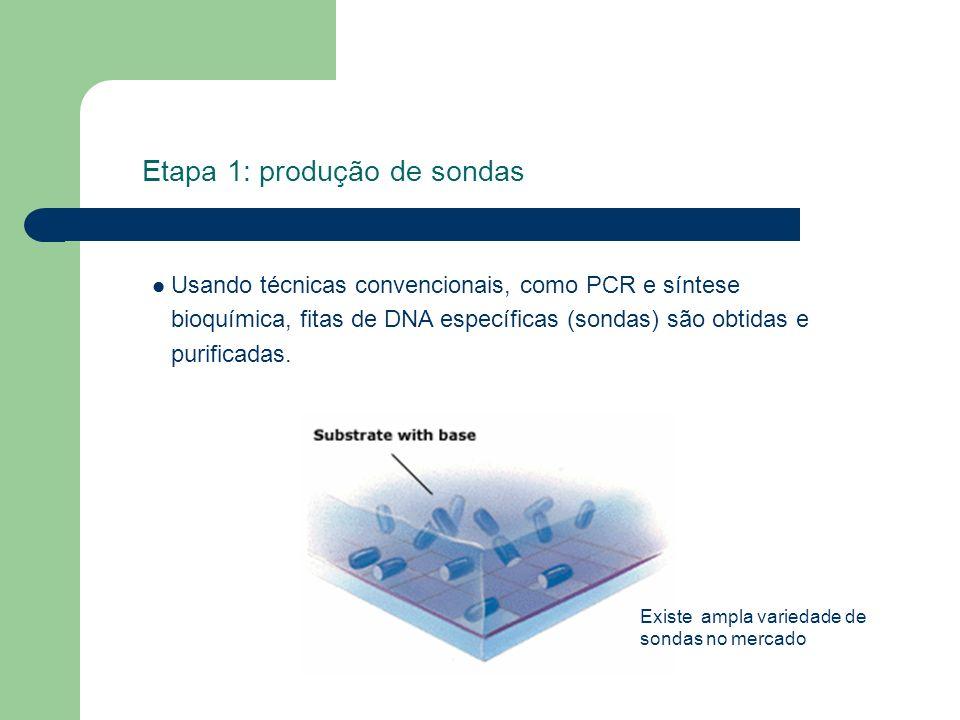 Etapa 1: produção de sondas