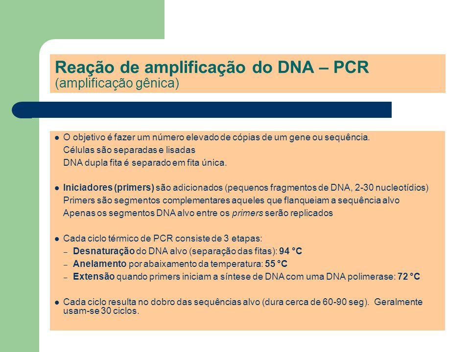 Reação de amplificação do DNA – PCR (amplificação gênica)