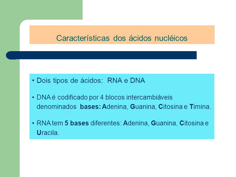 Características dos ácidos nucléicos