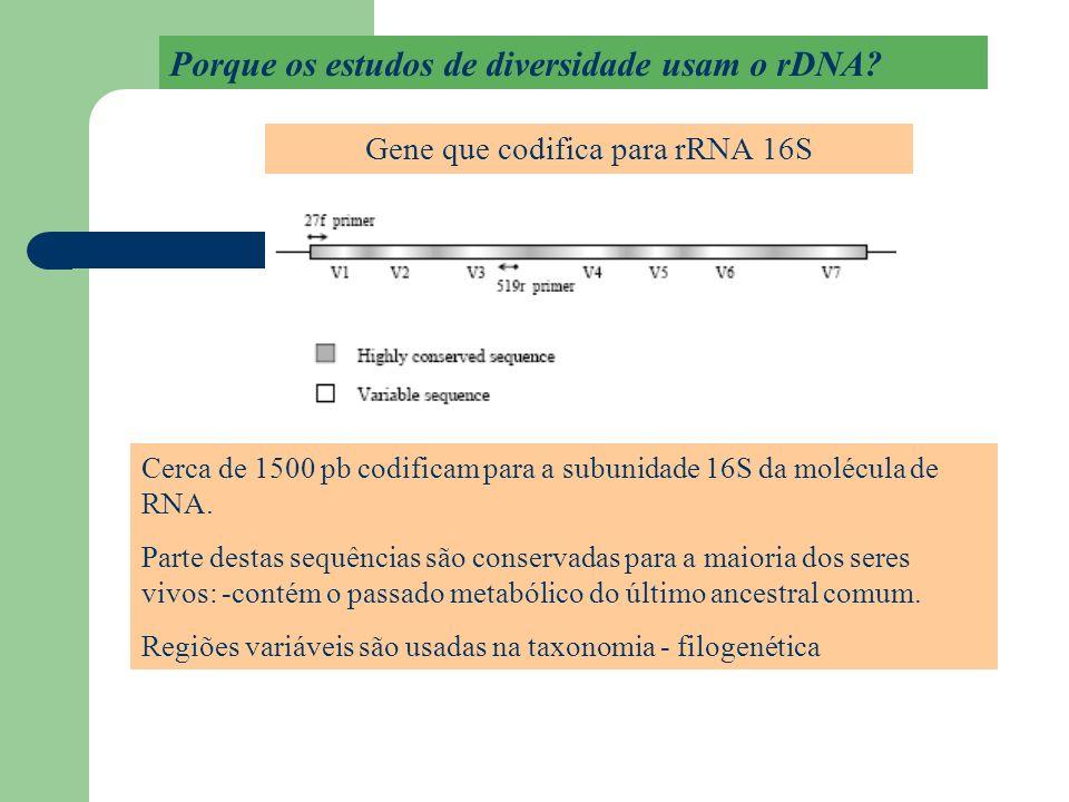 Gene que codifica para rRNA 16S