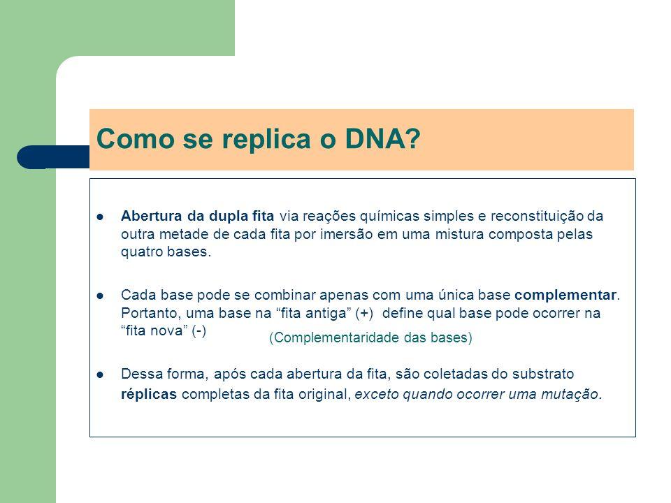 Como se replica o DNA