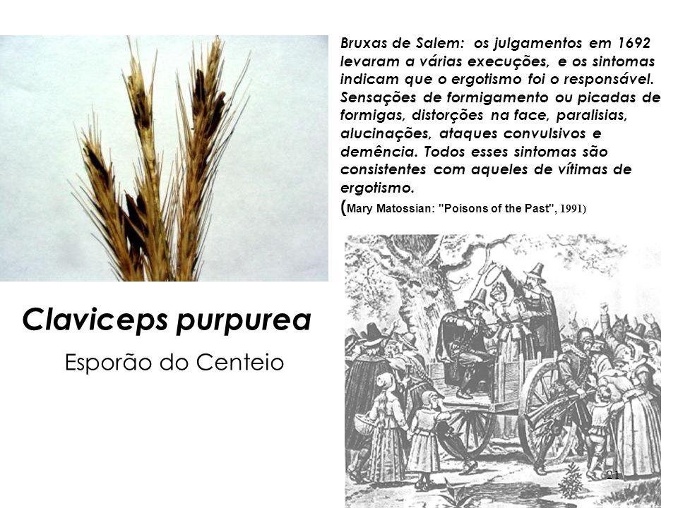 Claviceps purpurea Esporão do Centeio