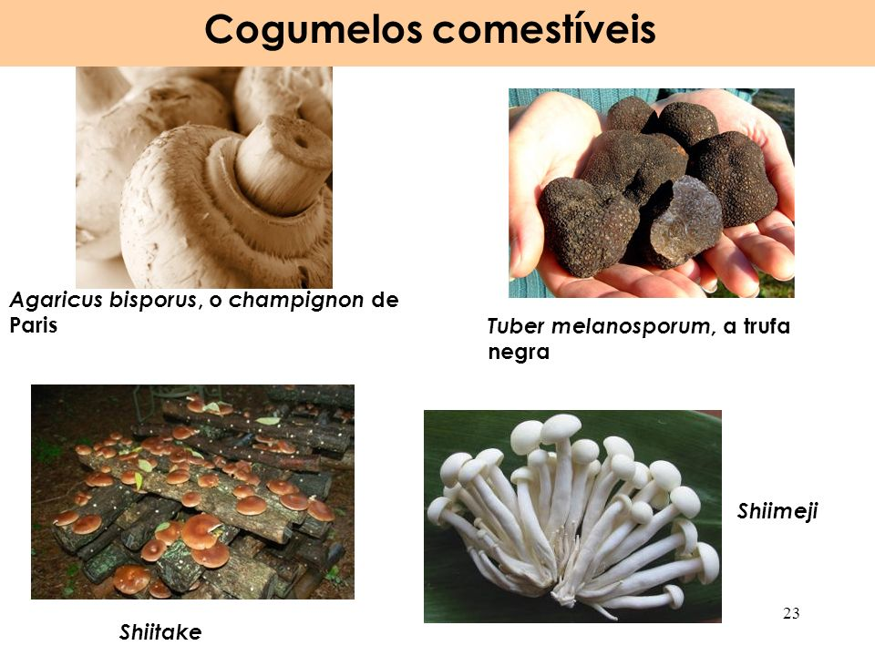 Cogumelos comestíveis