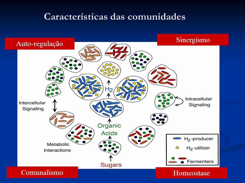 Características das comunidades