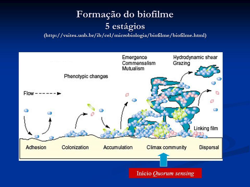 Formação do biofilme 5 estágios (http://vsites. unb