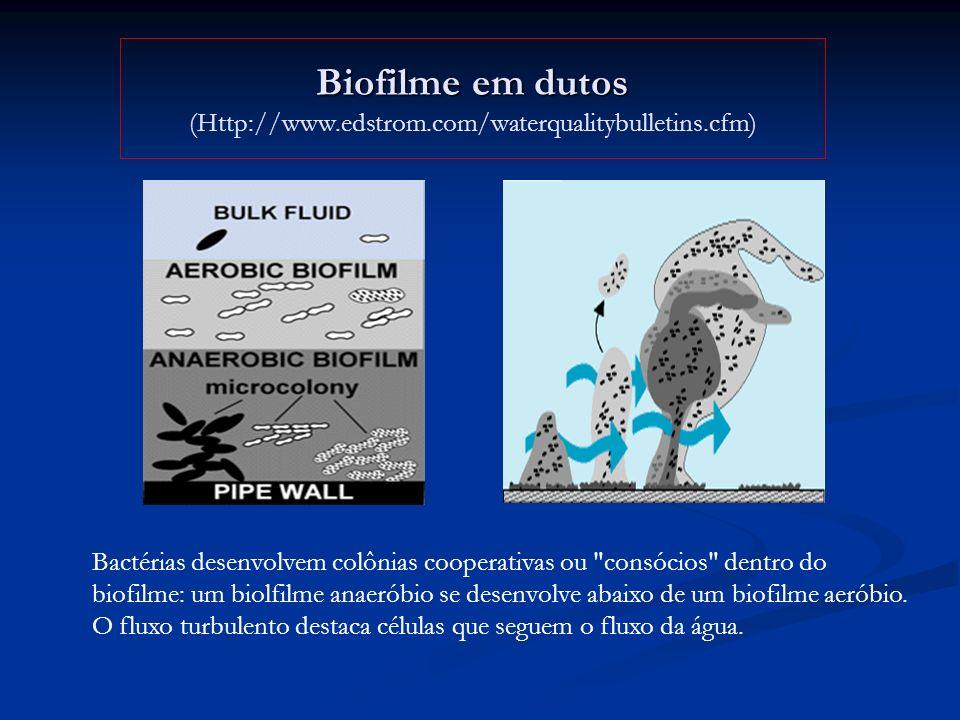 Biofilme em dutos (Http://www.edstrom.com/waterqualitybulletins.cfm)