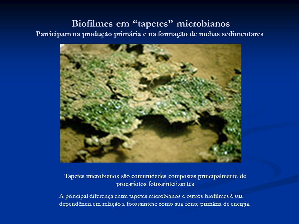 Biofilmes em tapetes microbianos Participam na produção primária e na formação de rochas sedimentares