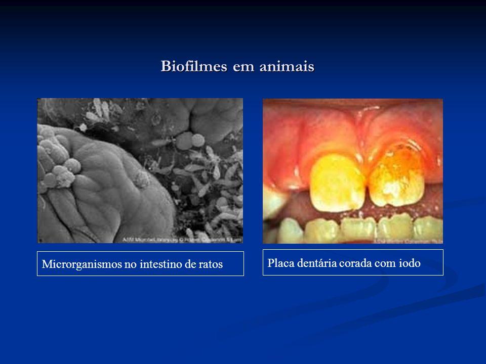 Biofilmes em animais Placa dentária corada com iodo