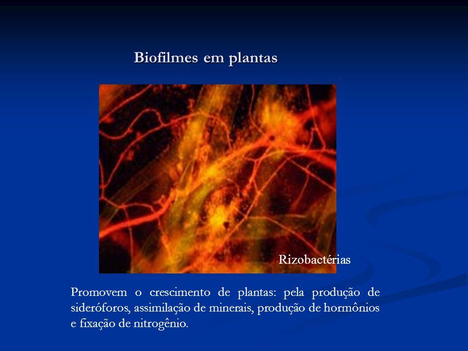Biofilmes em plantas Rizobactérias