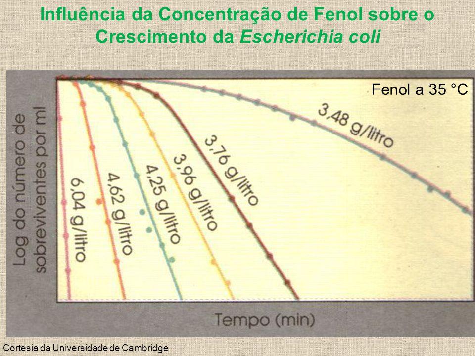 Influência da Concentração de Fenol sobre o Crescimento da Escherichia coli