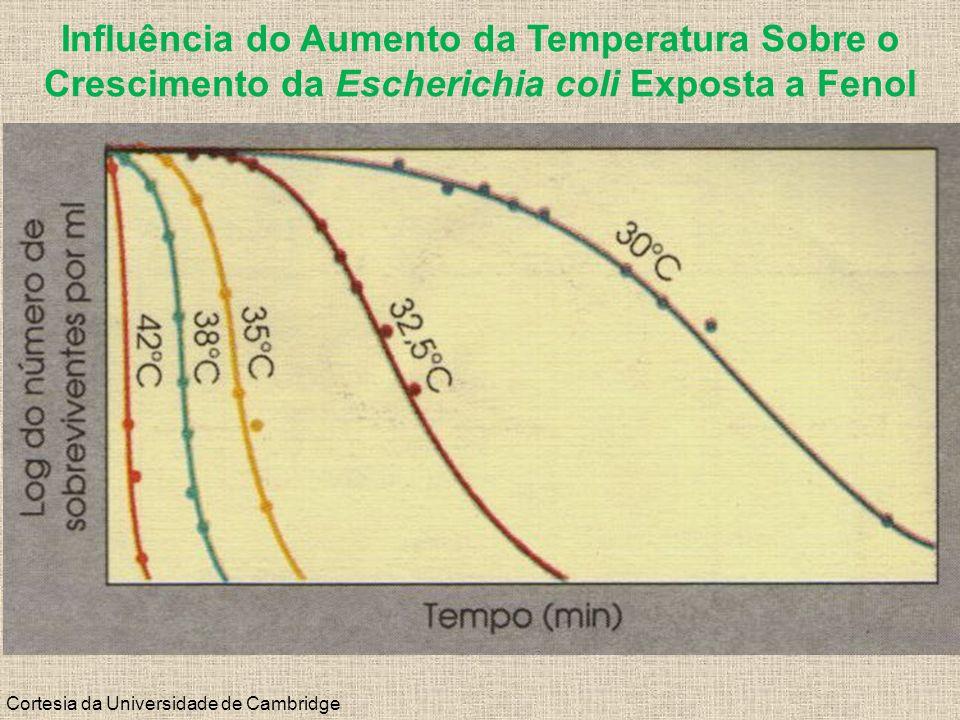 Influência do Aumento da Temperatura Sobre o Crescimento da Escherichia coli Exposta a Fenol