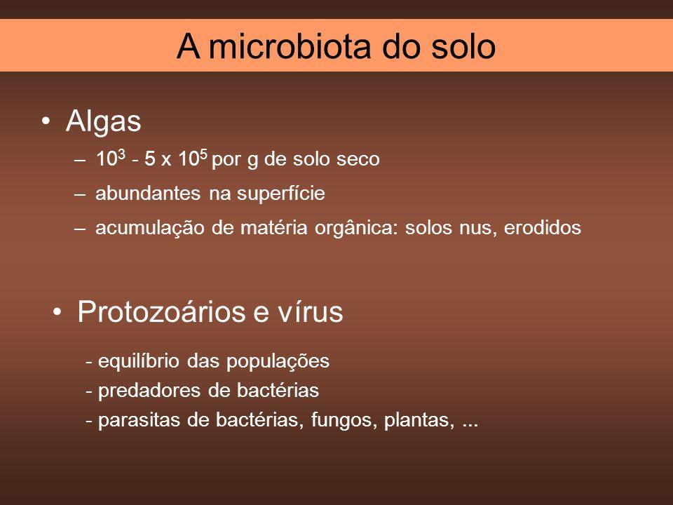 A microbiota do solo Algas Protozoários e vírus