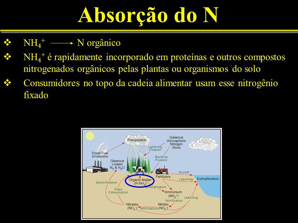 Absorção do N NH4+ N orgânico