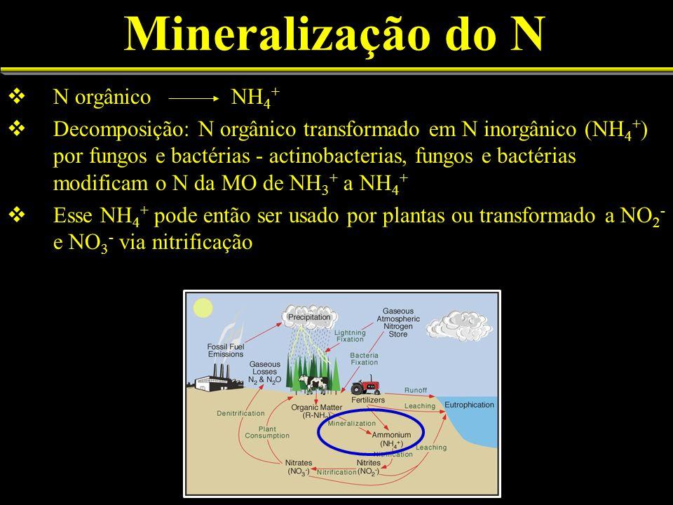 Mineralização do N N orgânico NH4+