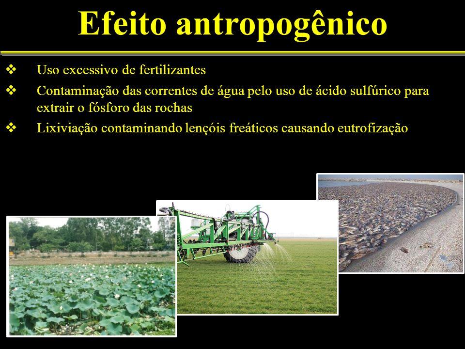 Efeito antropogênico Uso excessivo de fertilizantes