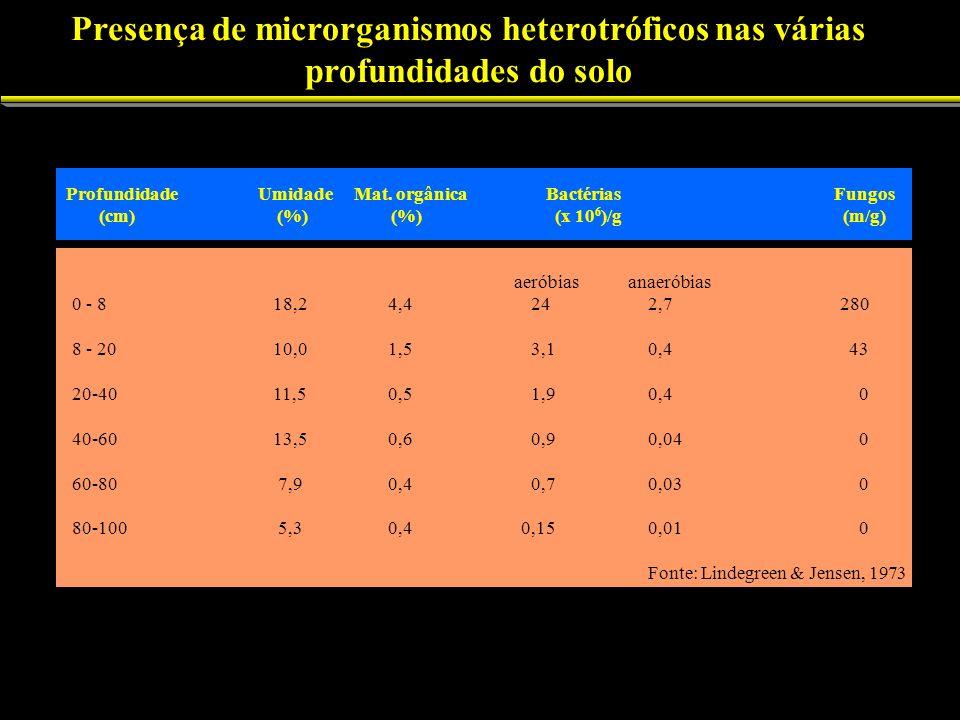 Presença de microrganismos heterotróficos nas várias