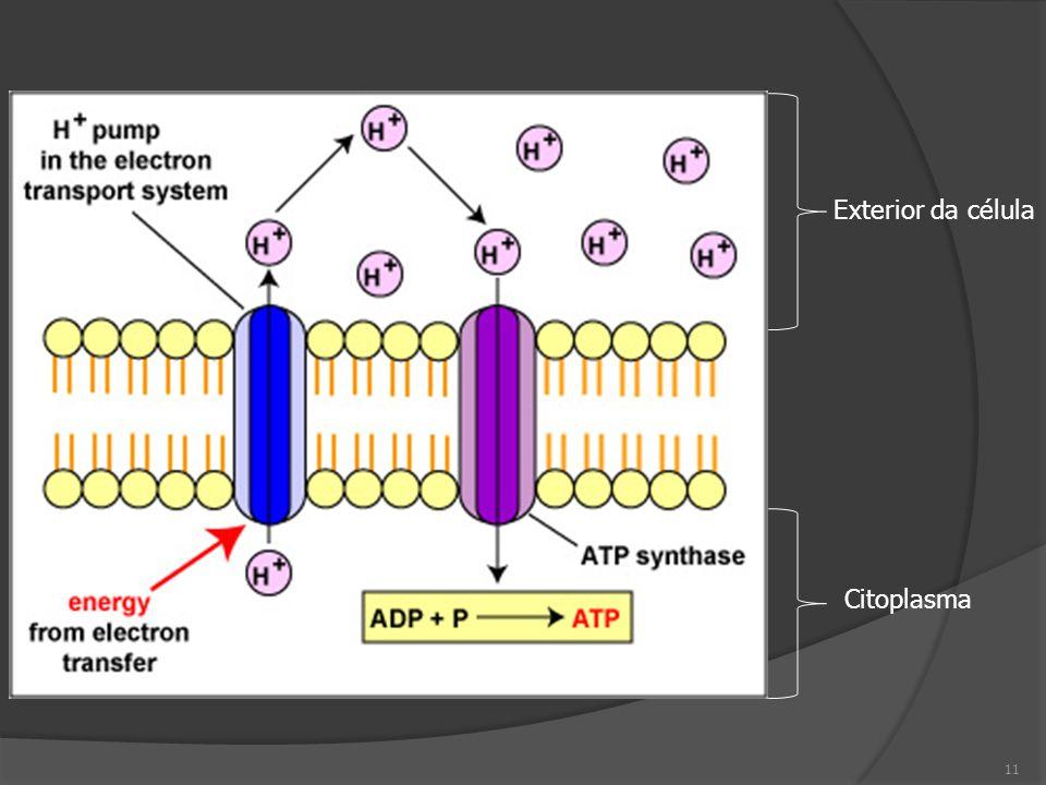 Exterior da célula Citoplasma