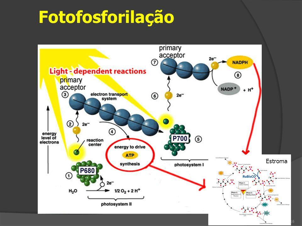 Fotofosforilação Estroma