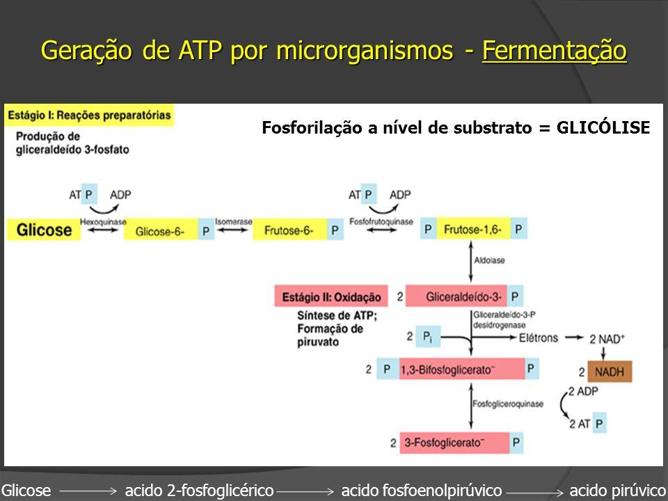 Geração de ATP por microrganismos - Fermentação