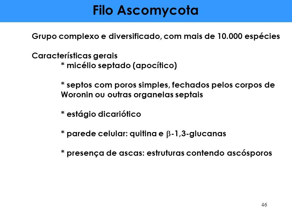Filo AscomycotaGrupo complexo e diversificado, com mais de 10.000 espécies. Características gerais.