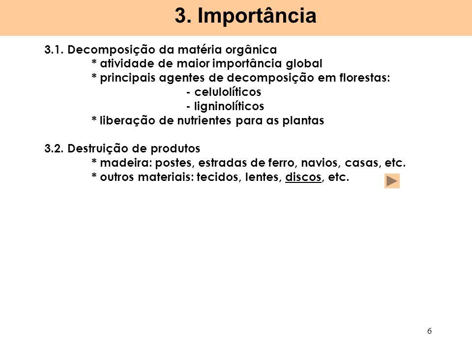 3. Importância 3.1. Decomposição da matéria orgânica