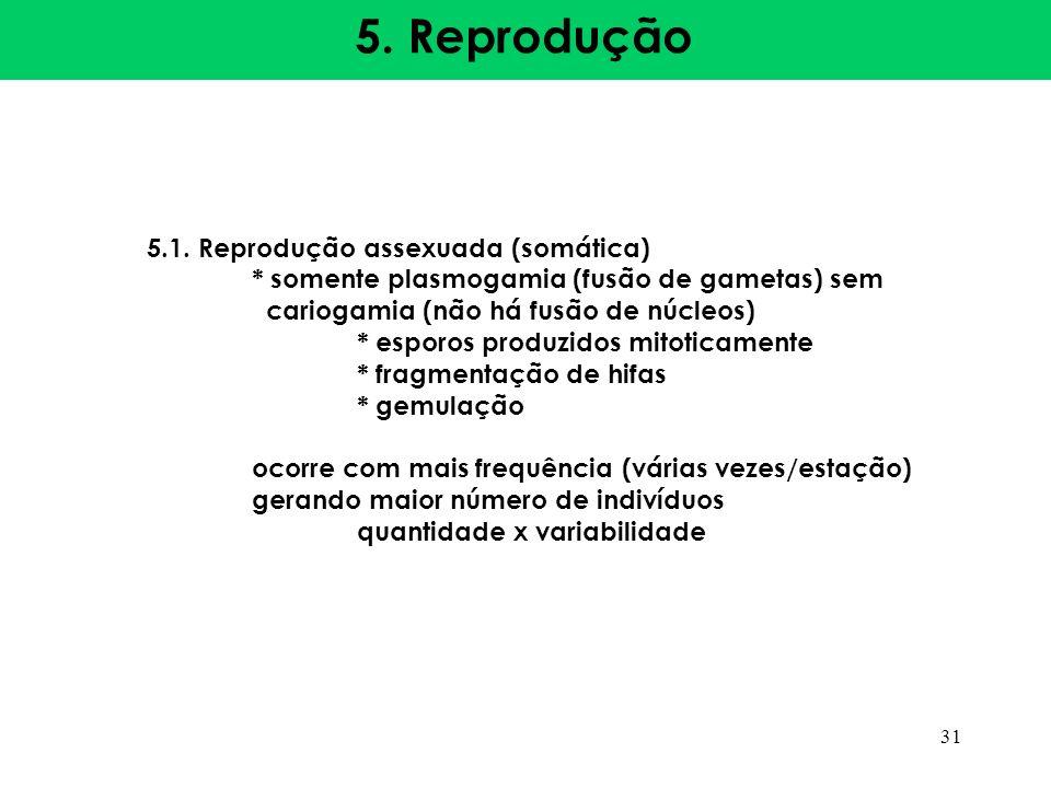 5. Reprodução 5.1. Reprodução assexuada (somática)