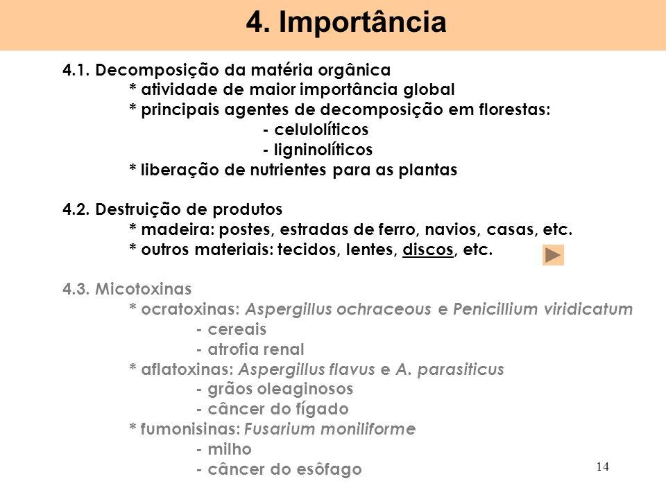 4. Importância 4.1. Decomposição da matéria orgânica