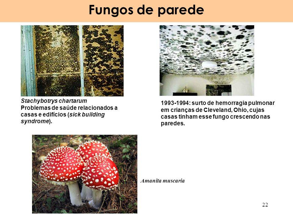 Fungos de parede Stachybotrys chartarum