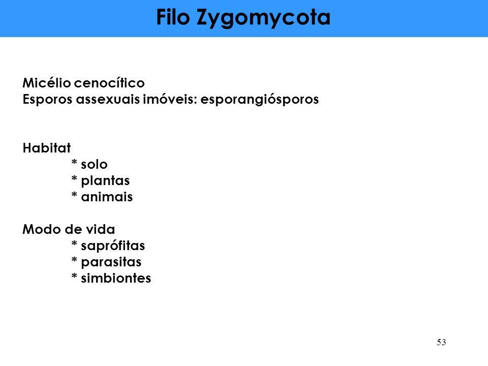 Filo Zygomycota Micélio cenocítico
