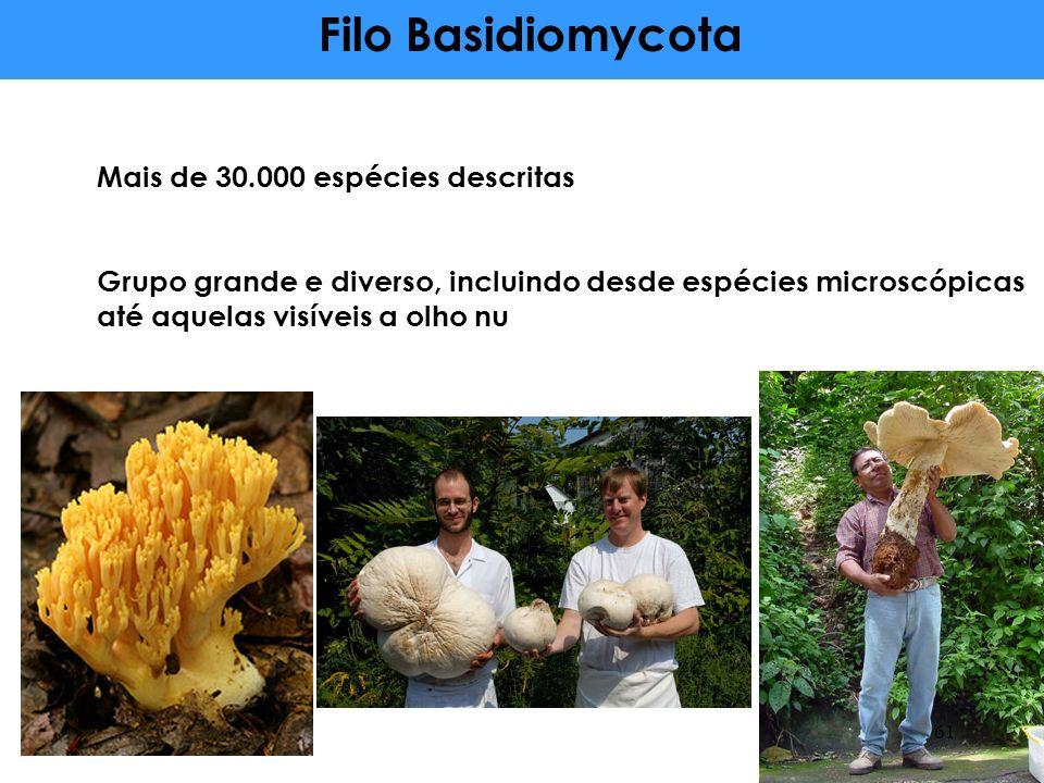Filo Basidiomycota Mais de 30.000 espécies descritas