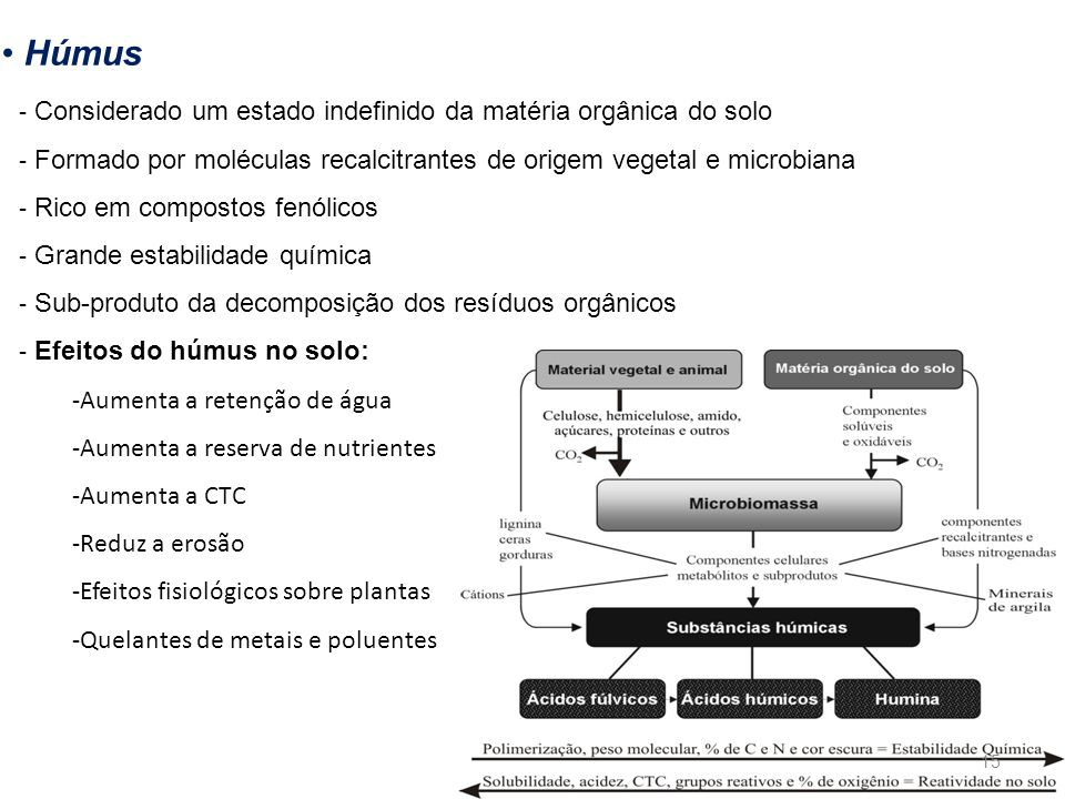 Húmus Considerado um estado indefinido da matéria orgânica do solo
