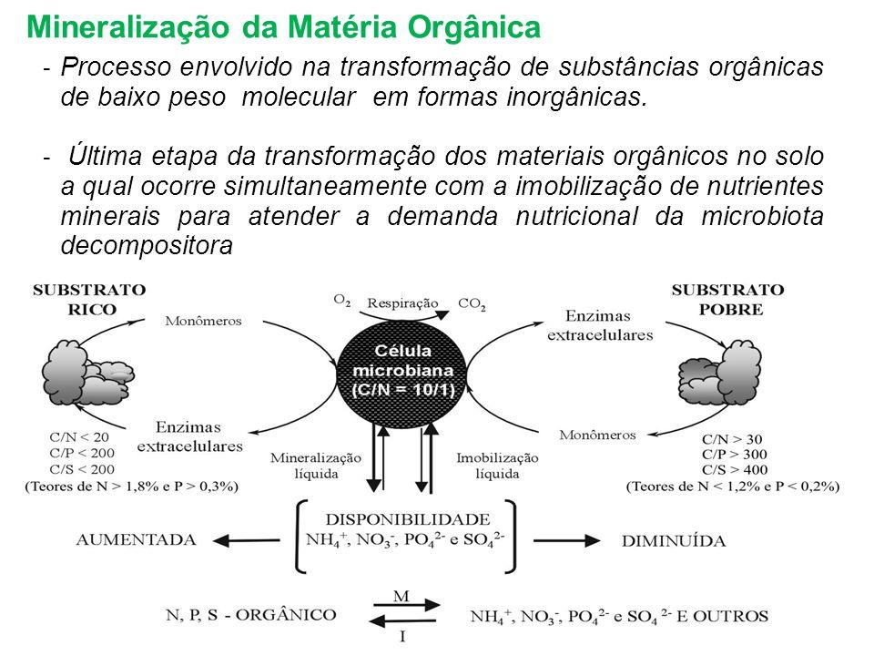 Mineralização da Matéria Orgânica