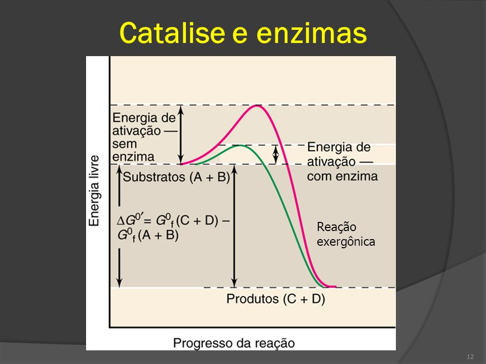 Catalise e enzimas Reação exergônica